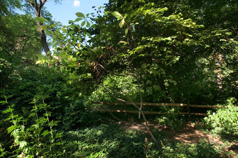 Image Result For Bartrams Garden