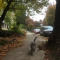 mtairy_cresheimcat