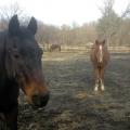 mtairy_monasteryhorses